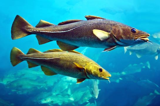 Cod Sunny Seas Nature Park
