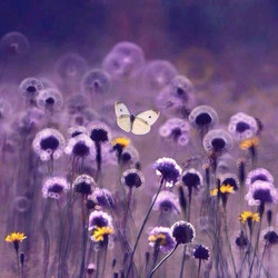 Purple field and butterfly Sunny Seas Art