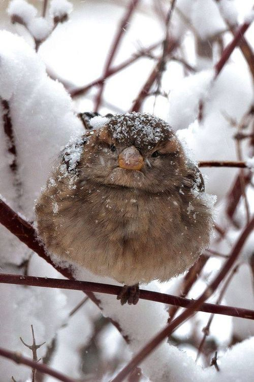 Bird in Winter Sunny Seas Nature Park