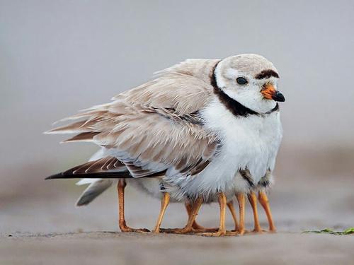 So cute Birds with their mom Sunny Seas Nature Park