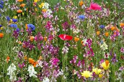 Flower Field Sunny Seas Art