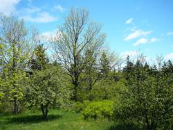 Spring Trees at Sunny Seas Nature Park