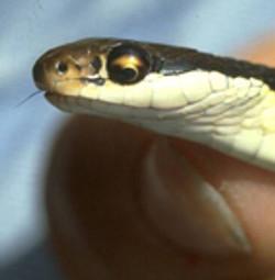 Ribbon Snake Sunny Seas Nature Park