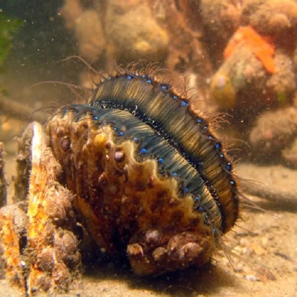 Sea Scallops Sunny Seas Nature Park