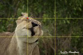 Mindful Photography - the Rule of Thirds