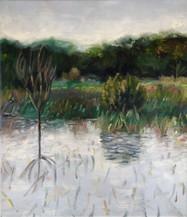 #8 $365, Winter Solstice, Ephemeral Pond