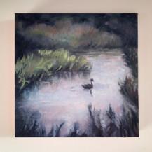 Sold #12   Swan Study