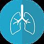 lungs-2803208_960_720.webp