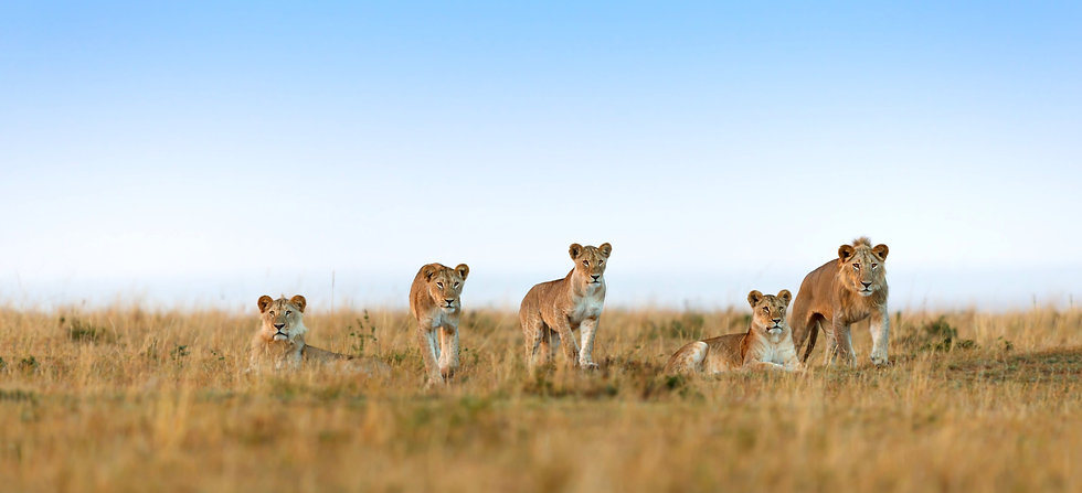 Leeuwen duurzaam reizen header.jpg