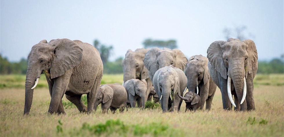 Olifanten duurzaam reizen header.jpg