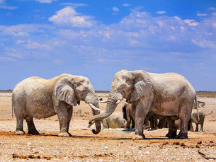 Bezienswaardigheid Namibië: Etosha National Park