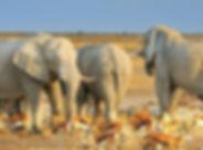Etosha Namibië klein.jpg