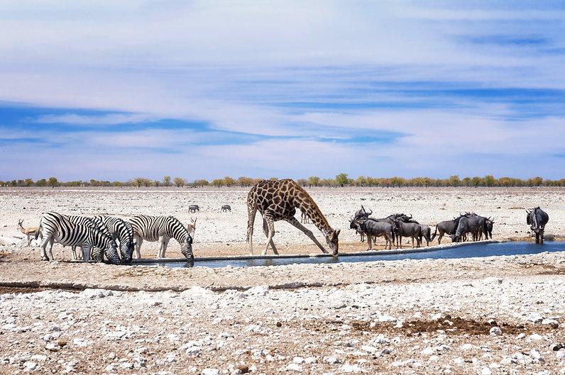 Etosha Namibië header.jpeg