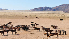 Bezienswaardigheid Namibië: Aus