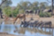 Kruger Park 2-min-min-header.jpg