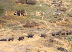 Bezienswaardigheid Botswana – de Okavango Delta