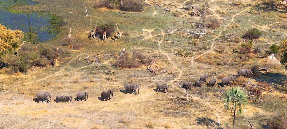 Okavango Delta Botswana header