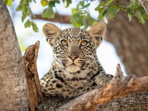 Top 10 highlights van Zuidelijk Afrika - welke je niet mag missen!