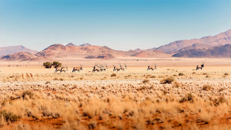 Namibië header.jpg
