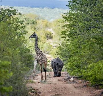 Safari Kruger Zuid-Afrika.jpg
