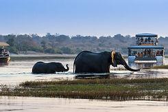 Chobe Botswana.jpeg