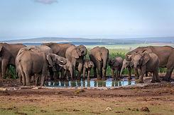 Olifanten Addo Zuid-Afrika.jpeg