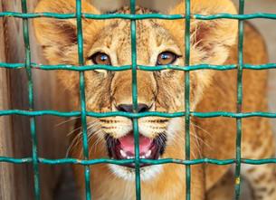 Belangrijke ontwikkeling in strijd tegen toeristische activiteiten met dieren