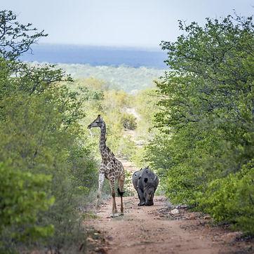Safari Kruger 9.jpeg