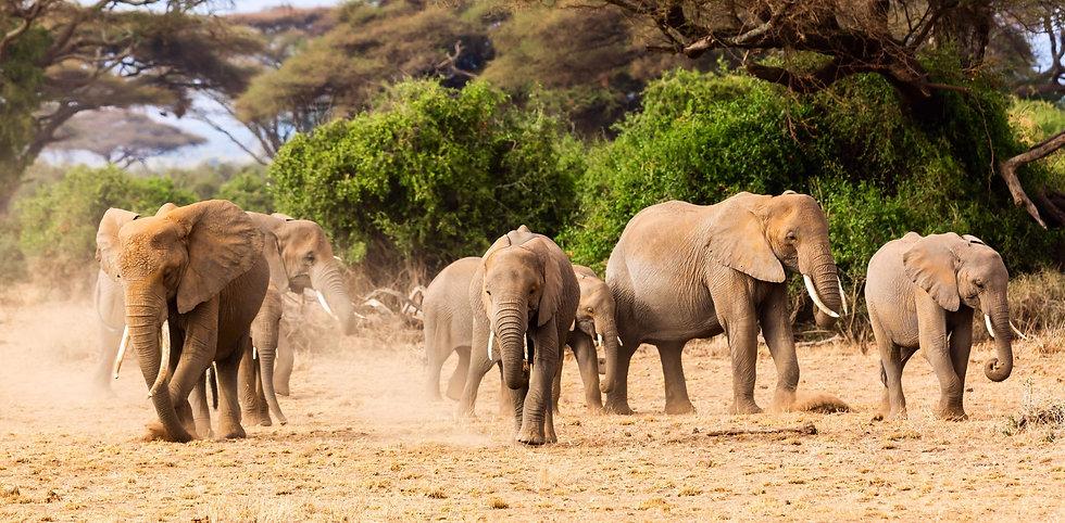 Olifanten Zuid-Afrika header.jpg