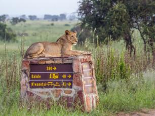 Bezienswaardigheid Zuid-Afrika: Kruger National Park