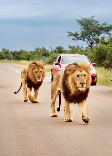 Safari Kruger.jpg