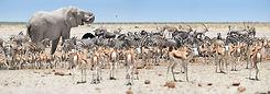 Etosha Namibië.jpeg