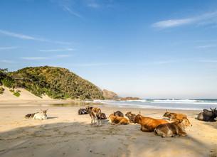 Bezienswaardigheid Zuid-Afrika: Coffee Bay, paradijs aan de Wild Coast