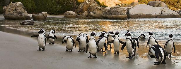 Boulders Beach Zuid-Afrika.jpeg