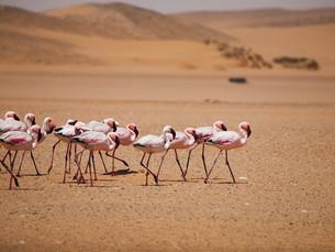 Bezienswaardigheid Namibië: Walvisbaai