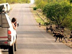 Kruger Park Safari (1) (1).jpg
