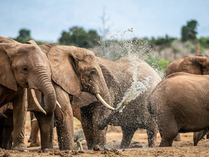 Bezienswaardigheid Zuid-Afrika: Addo Elephant National Park