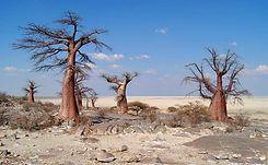 Makgadikgadi Botswana.jpg