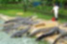 Crocodile Farm.jpg