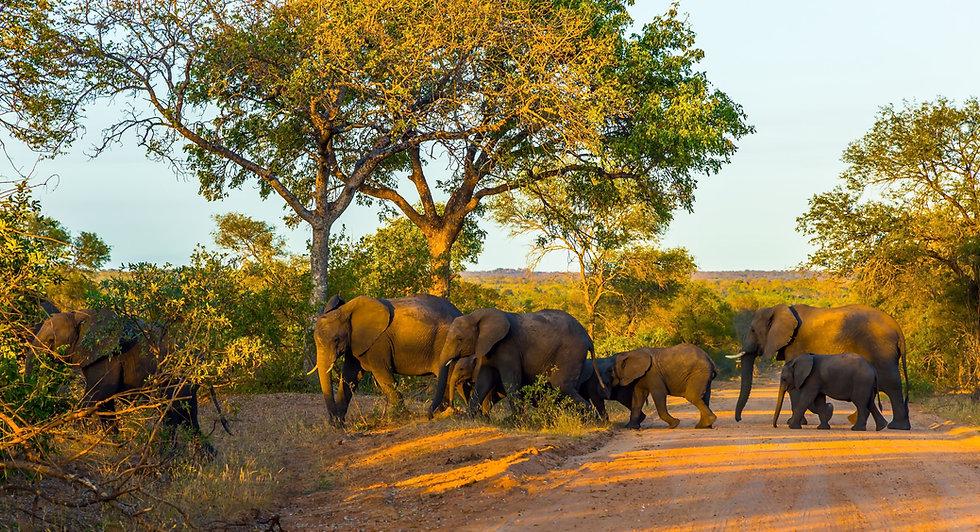 Olifanten Zuid-Afrika Botswana header.jp