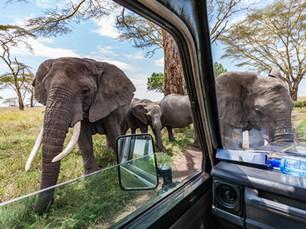 De top 10 nationale parken van Zuid-Afrika