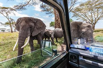 Safari Kruger 3.jpeg