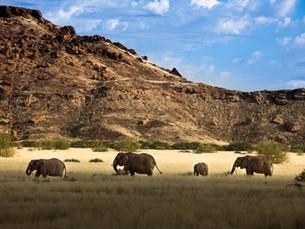 Bezienswaardigheid Namibië: Damaraland