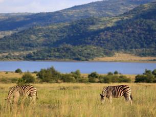 Bezienswaardigheid Zuid-Afrika: Pilanesberg National Park