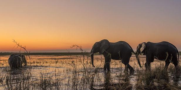 Olifanten Chobe.jpg