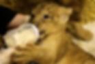 Lionfarm.jpg