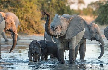 Olifanten Botswana.jpeg