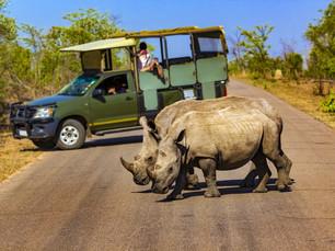 Leuke weetjes over de dieren die je tegenkomt op safari