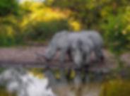 Neushoorns Marakele National Park.jpg