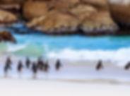 Boulder's Beach Kaapstad Zuid-Afrika kle
